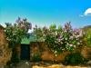 Lilac in Santa Linya